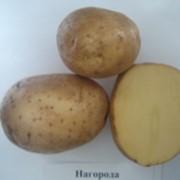 Картофель, УАВК улучшает производительность картофеля фото