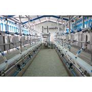 Sali de muls cu iesire rapida pentru oi/capre фото
