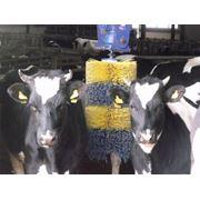 Расчески для коров фото