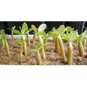 Стимуляторы роста растений фото