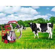Доильные аппараты для коров My Milka фото