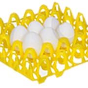 Пластиковая ячейка для куриных яиц фото