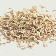 Семена газонных трав фото