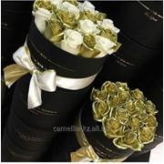 Розы Камеллия фото