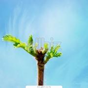 Пестицид для сельского хозяйства фото