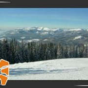 Катание на лыжах в зимних Карпатах фото
