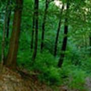Охрана лесов от пожаров, вредителей, болезней фото