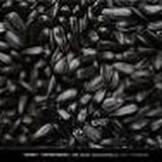Семена подсолнечника Рими Новинка! фото