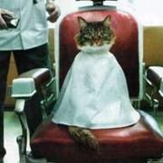 Стрижка котов гигиеническая фото