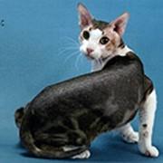 Продажа котов сфинксов фото