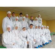 Reproducere crestere porcilor Moldova фото