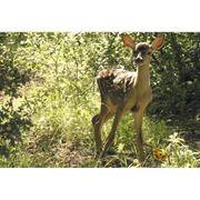 Охотничье хозяйство Лосиный остров фото