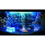 Подбор декораций для аквариумов фото