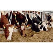 Оборудование для кормления коров фото