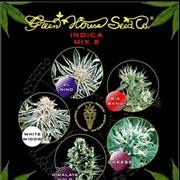 Семена конопли Indica Mix E фото