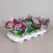 Бегония блад Beleaf Mixtrolley -- Begonia blad Beleaf Mixtrolley фото
