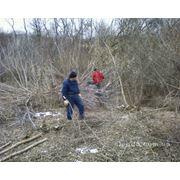 Уборка территории и вывоз мусора фото