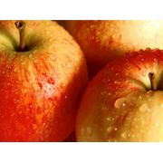 Яблоки выращивание и доставка фото