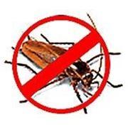 Борьба с насекомыми (дезинсекция) фото