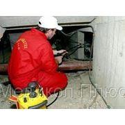 Уничтожение крыс, мышей - дератизация фото