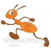 Уничтожение муравьев. фото
