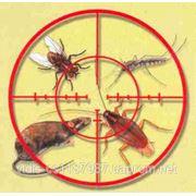ЗНИЩУЄМО щурів, мишей, тарганів, мурах, ос, клопів, бліх Надаємо послуги по газації та фумігації фото