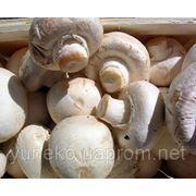 Трудоустройство в Польше для работников на сбор грибов фото