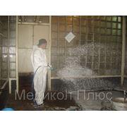 Уничтожение грызунов - дератизация фото