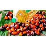 Продам масло пальмовое фото