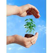 Охрана растительного мира фото