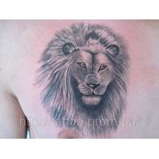 Татуировка льва на груди фото