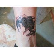Тату крысы. Перекрытие старй татуировки. фото