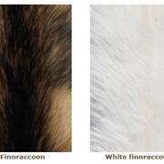Различные меха енота фото