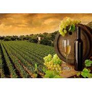 Тур выходного дня экскурсия с дегустацией таировских вин фото