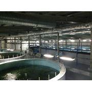 Строительство и запуск рыбных хозяйств Строительство фото