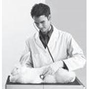 Бактериологические ветеринарные исследования фото