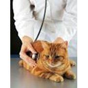 Все виды ветеринарных услуг фото