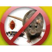Дезинфекция дезинсекция дератизация борьба с мышами крысами в Алматы фото