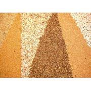 Аналитика рынка зернобобов фото