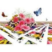 Дизайн разработка буклета каталога журнала карточки фото