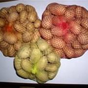 Услуги по фасовке овощей и фруктов фото