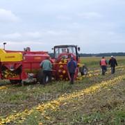 Инвестиционный проект Фермерским хозяйствам, СГП, СТОВ по совместному выращиванию сельхозкультур фото