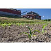 Аренда сельскохозяйственных угодий фото