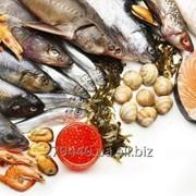 Риба морожена та готова рибна продукція фото