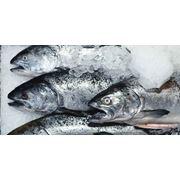 анализ рынка рыбопродукции Составление бизнес-планов маркетинговые исследования фото