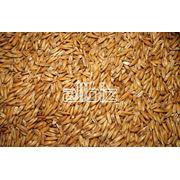 Экспорт зерна из Казахстана ТОО Муган фото
