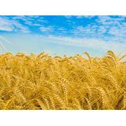 Экспорт сельхозпродукции в больших объемах_поиск клиентов фото