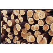 Услуги по организации экспорта лес. Черниговская область фото