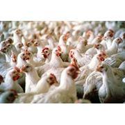 Оптовая торговля сельскохозяйственной продукцией фотография