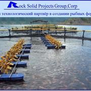 Строительство рыбоводческих комплексов (УЗВ). фото